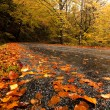 Autumn landscape - Foto de Stock