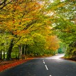 Beautiful road — Stock Photo #4940523