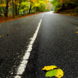 Leafs on the road — Stock Photo