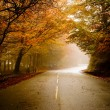 Beautiful road — Stock Photo #4940657