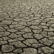 Dry Mud Field — Stock Photo