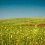 sklizeň pole — Stock fotografie