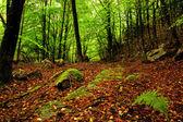 Woodland — Stock Photo