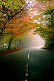 Prachtige weg — Stockfoto