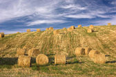Hay bales standing ready to be collected — Stock Photo