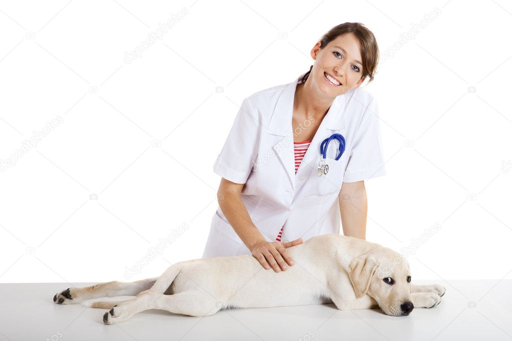 Young female veterinary taking care of a beautiful labrador dog — Stock Photo #5069628