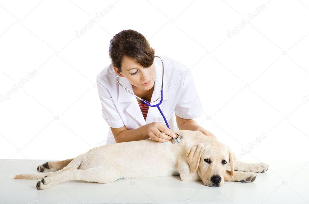 Уход за здоровьем собаки