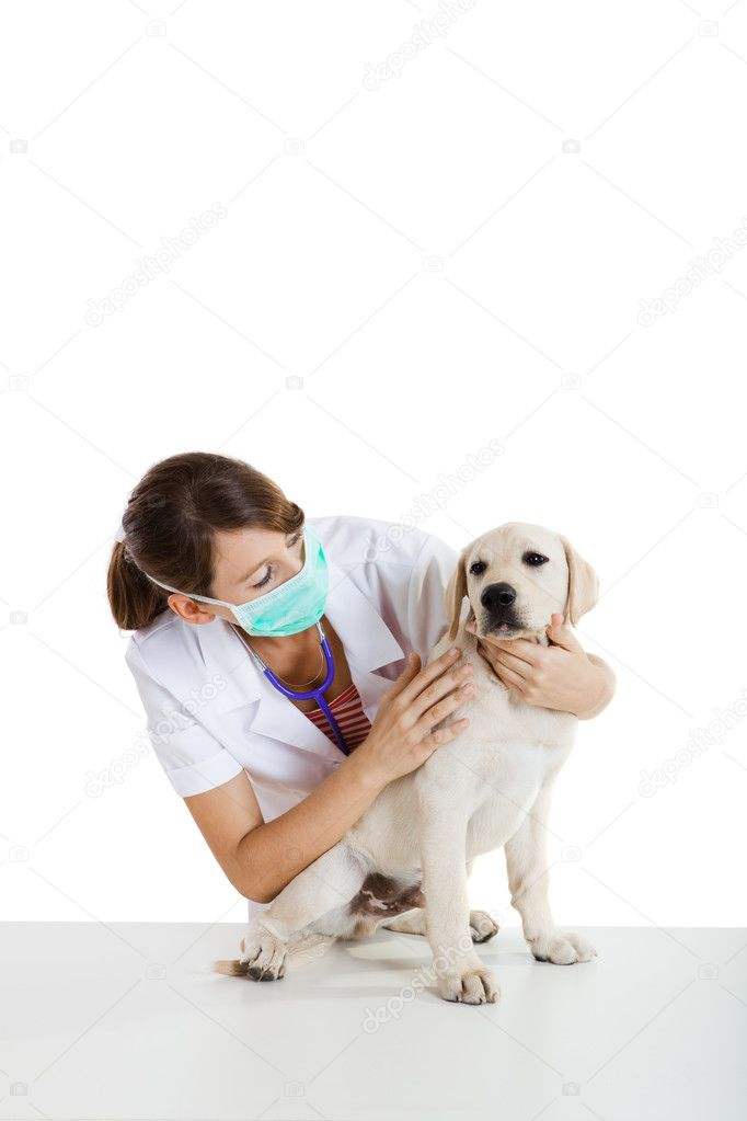 Young female veterinary taking care of a beautiful labrador dog — Stock Photo #5069680