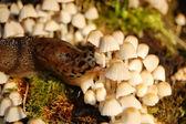 Slug — Stock Photo