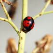Ladybug on stem of plant — Stock Photo