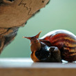 Funny snail — Stock Photo
