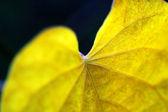 Details of leaf — Stock Photo