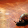 Stock Photo: Snail over orange tile