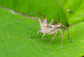 Lynx spider on plant — Stock Photo