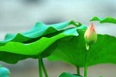 Small bud and leaves — Stock Photo