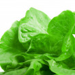 Lettuce — Stock Photo #3670459