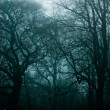 Foto Stock: Haunted Forest