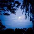 Stock Photo: Moonlight