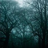 Nawiedzonego lasu — Zdjęcie stockowe