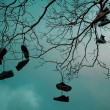 Shoetree — Stock Photo