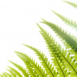 Fern Light — Stock Photo