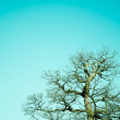 Ancient Oak — Stock Photo #2990137