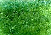 Paprocie i trawy — Zdjęcie stockowe