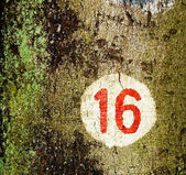 16 — Fotografia Stock