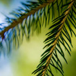 Fir Branches — Stock Photo #3064223