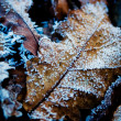 Frozen Leaves — Stock Photo #3065391