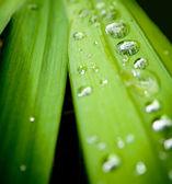 Новый зеленый — Стоковое фото
