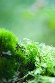 Moss 的世界 — 图库照片