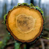 木圆环 — 图库照片