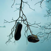 Shoetree — Fotografia Stock