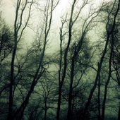 Haunted woods — Stockfoto
