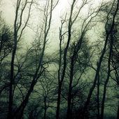Nawiedzone lasy — Zdjęcie stockowe