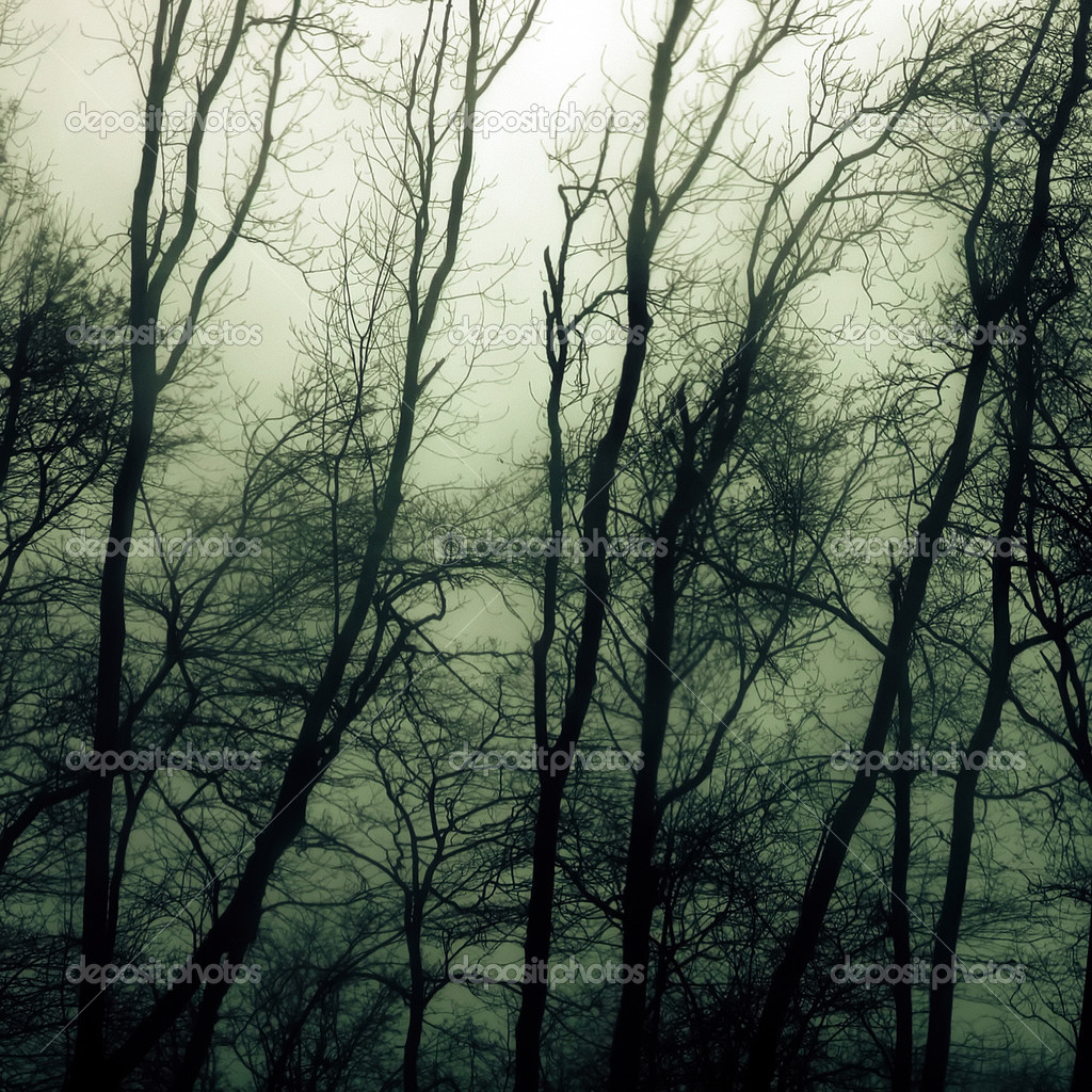 Haunted woods during a heavy thunderstorm.  Stock Photo #3079608