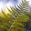Foto de Stock  : Fern Worlds