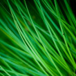 Reed — Stock Photo #3100431