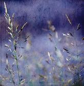 Artifical Grass — Stock Photo