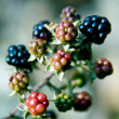 Black Raspberries — Stock Photo #3118402