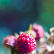 Foto de Stock  : Raspberries