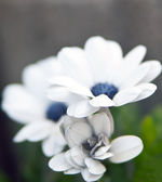 Small Flower — Stock Photo