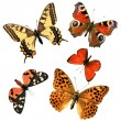 Butterfly group — Stock Photo #2752530