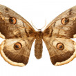 Butterfly — Stock Photo #2792541