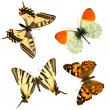 Butterfly group — Stock Photo #3898887