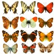 Butterfly group — Stock Photo #3898900