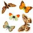 Butterfly group — Stock Photo #3898906