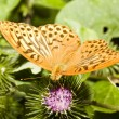 Butterfly on a flower — Stock Photo