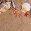 Starfish, seashells — Foto Stock